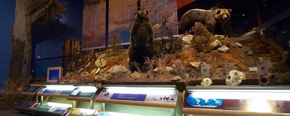 A Treasure from Our West: Bear exhibit.