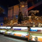 Treasures from Our West: Grizzly bear exhibition