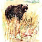 Illustration by Barbara Harmon.
