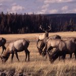 Deadline approaches for 2016 Camp Monaco Prize submissions on Yellowstone biodiversity