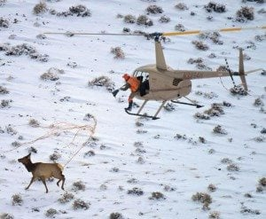Researching elk migration