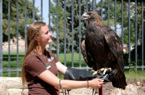 Nicole and Kateri, the golden eagle. Kateri weighs more than 12 pounds.