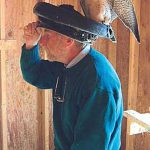 How Hats Helped Save the Peregrine Falcon