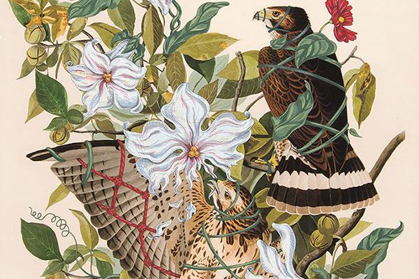 """A Treasure from Our West: """"Araujia Sericifera"""" by Penelope Gottlieb. 10.13.1"""