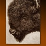 Lunchtime Expedition uncovers history and restoration of iconic Smithsonian bison display