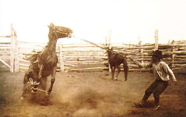 L.A. Huffman (1854-1931). Bronco Cross-Hobbled and Saddled, undated. MS 100 L.A. Huffman Collection.