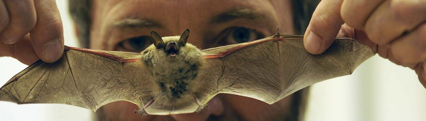 Philip McClinton and a California myotis rescued from the Center of the West in 2008. (detail)