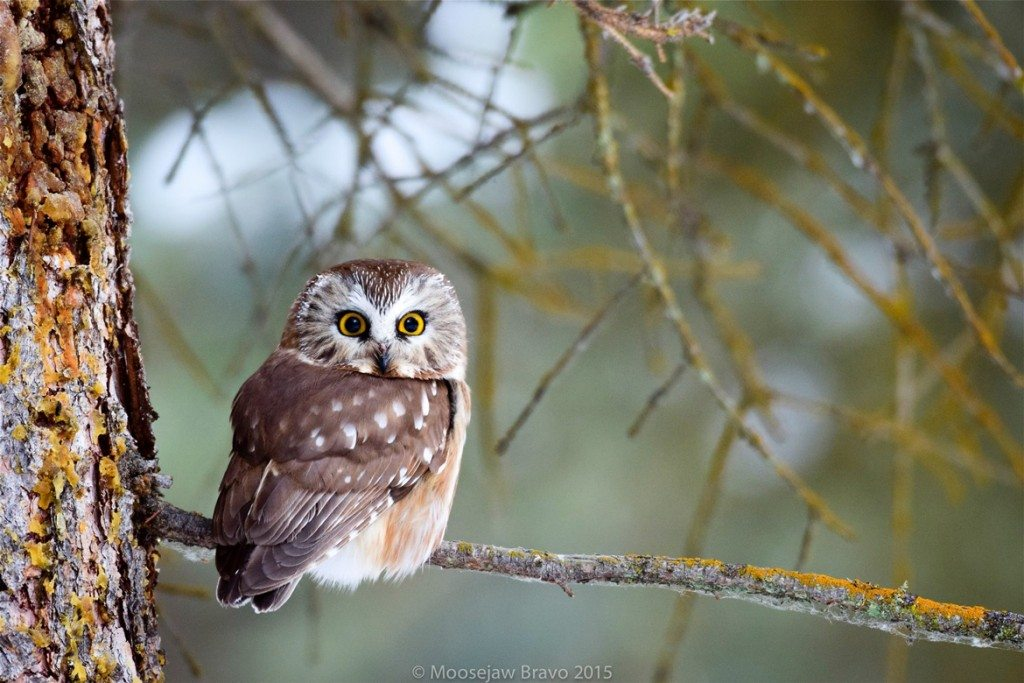 Purdue Owl Online Writing Lab - Dissertation help