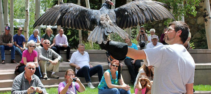 The Draper Museum Raptor Experience presents a program with live birds of prey at 2:30 p.m. in City Park on Earth Day, April 22. Here Assistant Raptor Program Manager Brandon Lewis shows turkey vulture Suli to a crowd at the Buffalo Bill Center of the West.