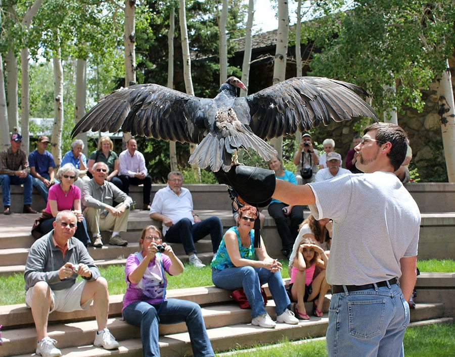 "What superhero powers does a turkey vulture have? Find out at ""Superheroes of Nature!"""