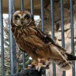 Owls of the Yellowstone Region program