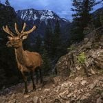 National Geographic opens exhibition on Yellowstone wildlife migration