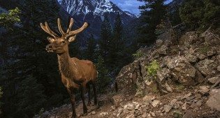 Elk by Joe Riis.