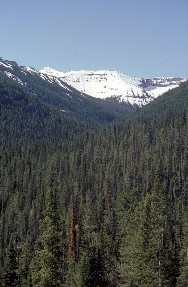 Springtime in the Rockies typically means plenty of snow remaining in the high country. Photo by C.R. Preston.