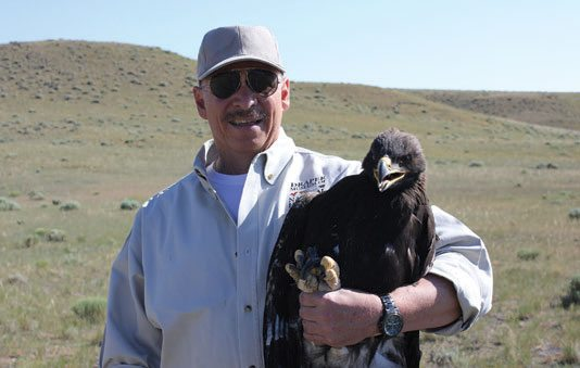 Dr. Charles R. Preston bands golden eagles for field research.