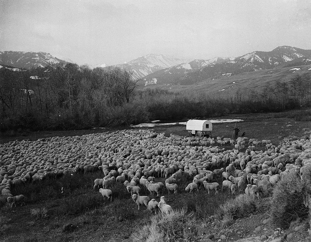 Charles J. Belden (1887-1966). John Piper at Francs Fork with flock of sheep. Black and white glass plate negative. MS 3 Charles Belden Collection, McCracken Research Library. P.67.421