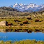 Center of the West Celebrates National Park Service 100th Anniversary