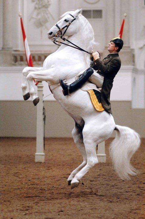 Lipizzaner, Spanish Riding School