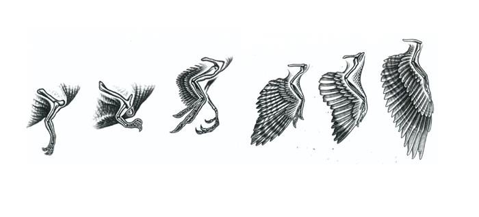 Arms to wings in dinosaurs