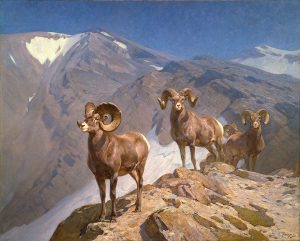 """A Treasure from Our West: """"The Mountaineers"""" by Carl Rungius. 16.93.2"""