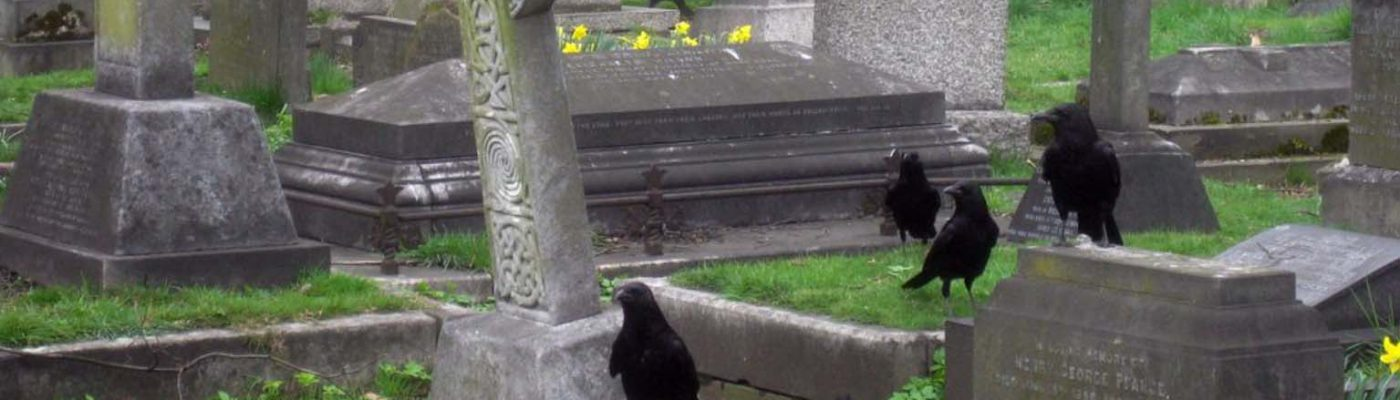 "A group-or ""murder""-of crows in a cemetery."