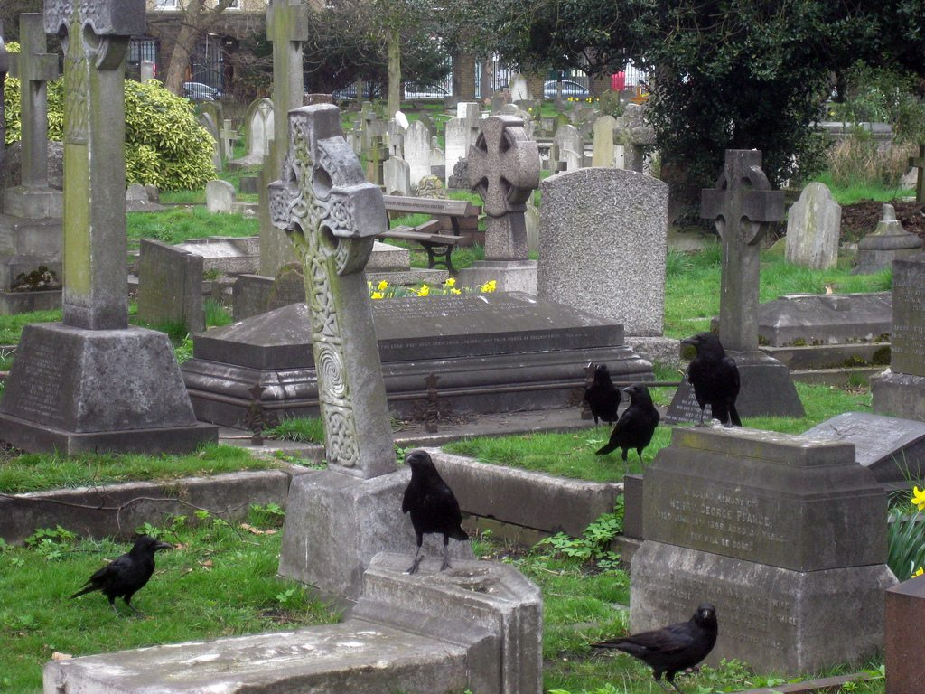 Aa group of crows in a cmetery.