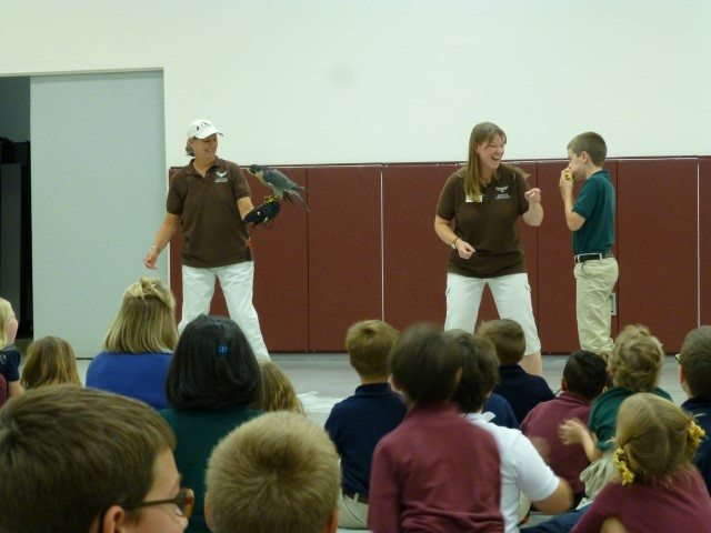 Peregrine falcon and student during eating contest.
