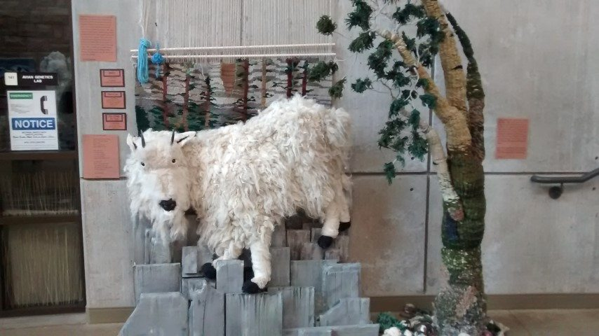 The Center was hosting a small exhibit on fiber arts. It was incredible as you can see by this mountain goat!
