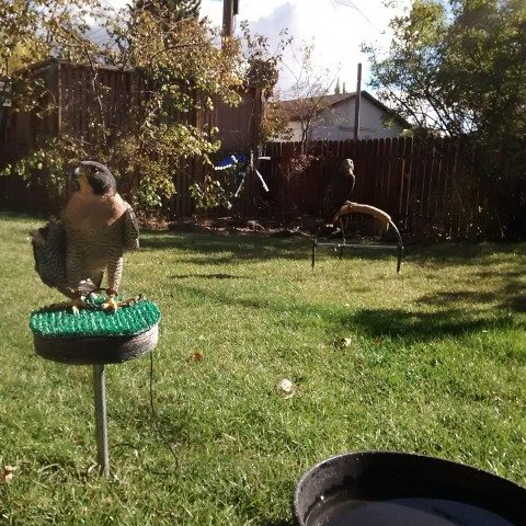 Hayabusa & Isham enjoy the sunshine in Laramie.