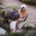 How Old and New World Vultures Differ