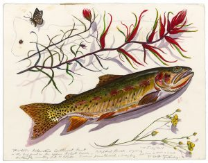 "James Prosek. ""Yellowstone Cutthroat Trout and Indian Paintbrush, 2015. Watercolor, graphite, and gouache on paper. L.486.2016.14 Art Scanning: Donald Sigovich, Westport, Connecticut."