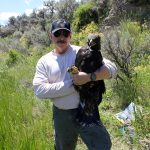 Free lecture explores dynamics of golden eagles and rabbits in Bighorn Basin