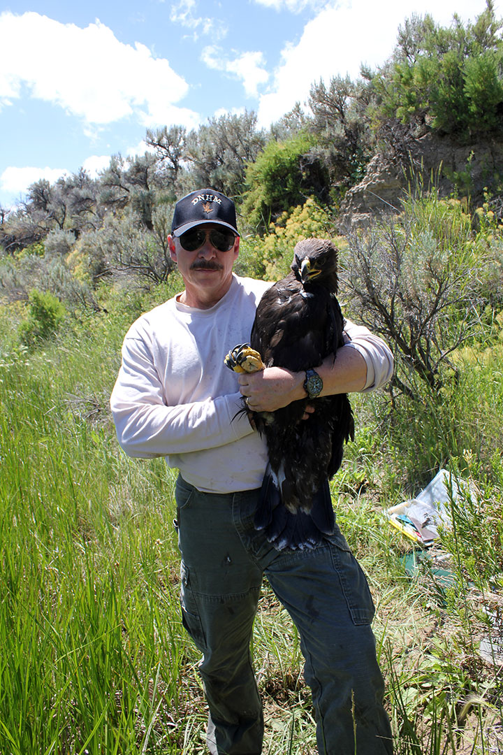 Dr. Charles R. Preston in the field with a golden eagle.