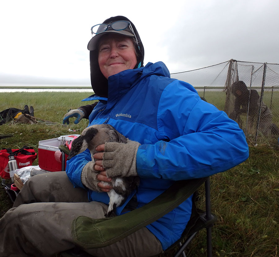 Kristine Sowl in the field banding geese.