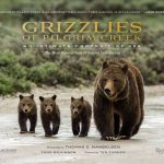 Famous Grizzly 399 subject of free lecture and book signing August 3