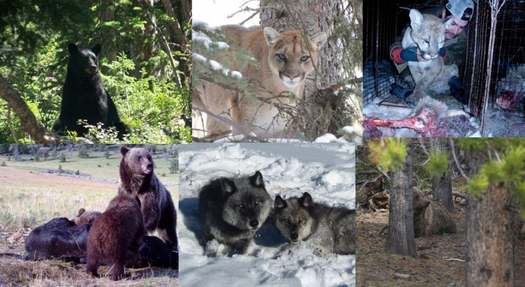 A collage of carnivores. Photo courtesy Dan Thompson.