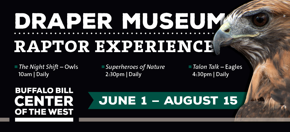 See our 9 live birds of prey: the Draper Museum Raptor Experience