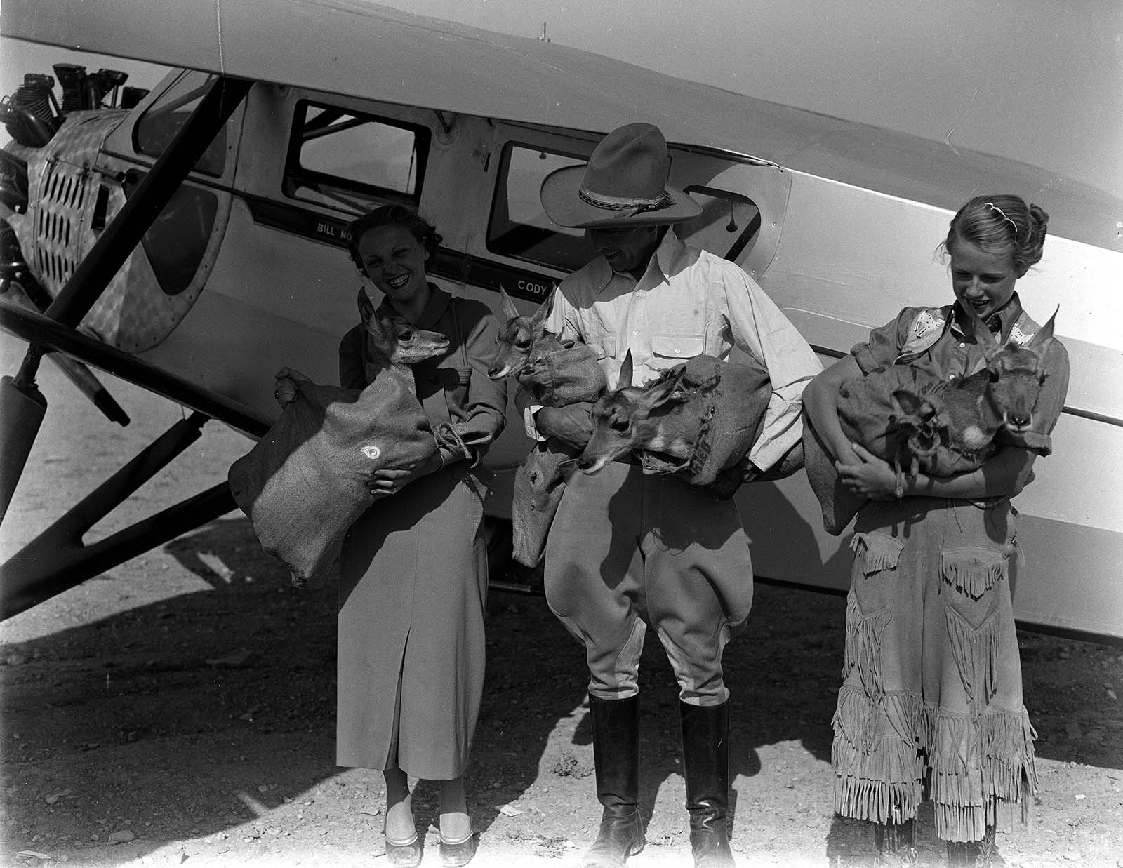 Bill Monday and helpers gather pronghorn for an airplane ride. MS 3 Charles Belden Collection. Loading Pronghorn: PN.67.695a