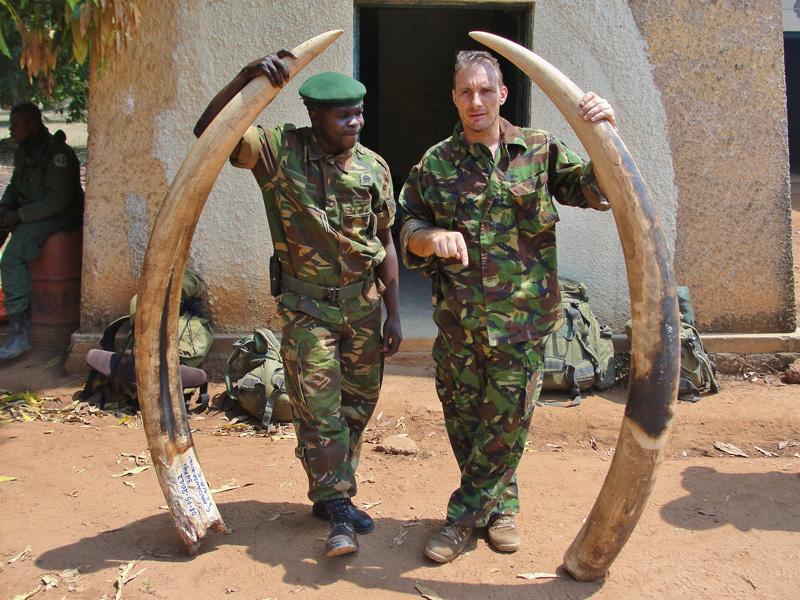 Elephant ivory seized from poachers in Garamba.