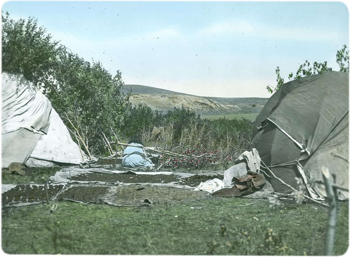 Berry cakes drying at temporary camp, ca. 1903-1925. MS 95 William Petzoldt Lantern Slide Collection. LS.95.78