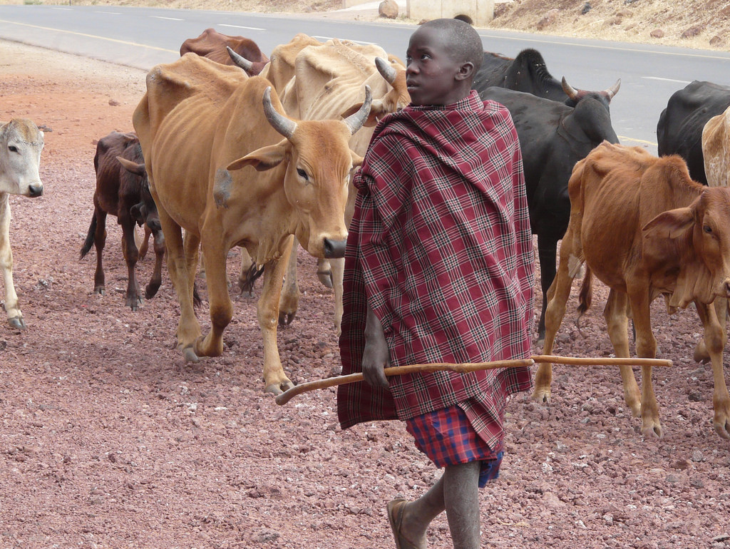Young Boy Herding Cattle in Tanzania