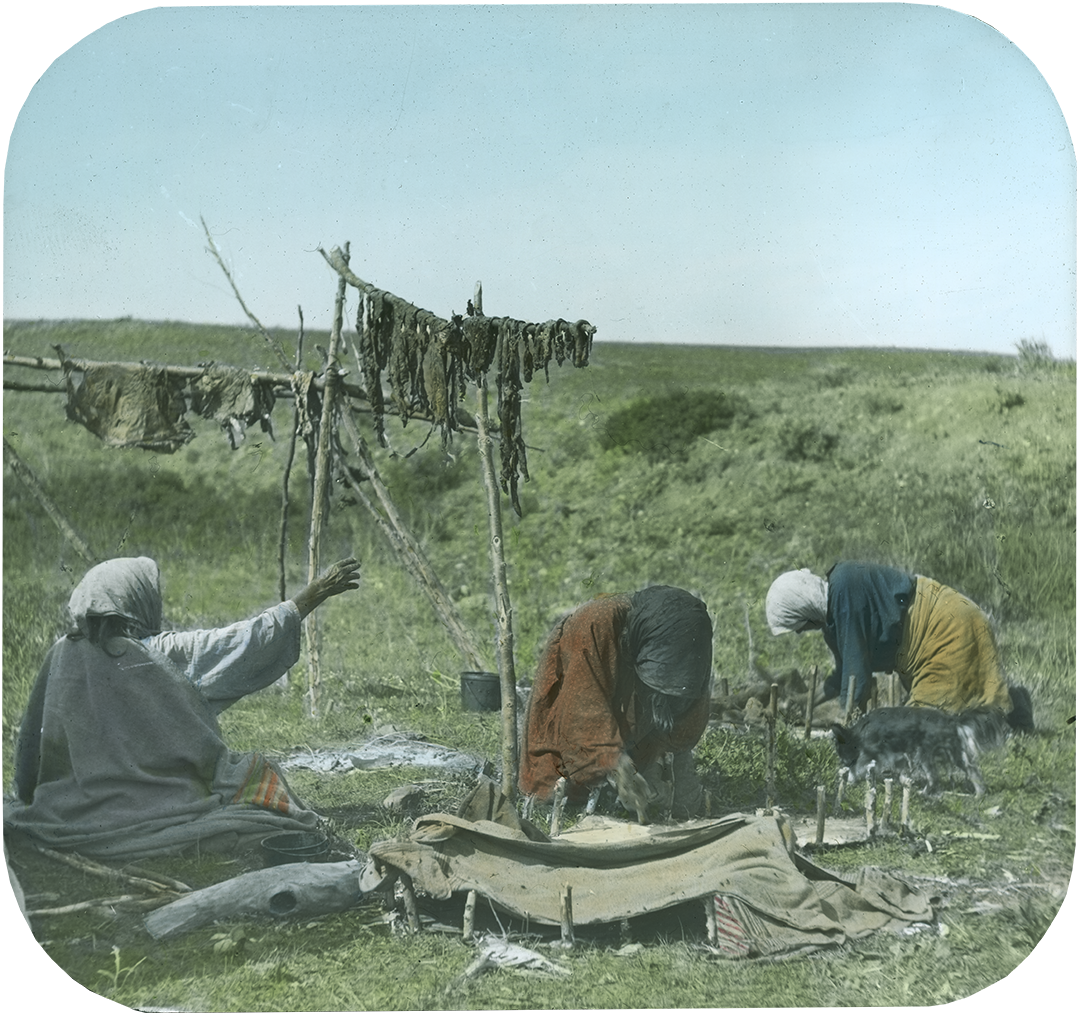 Crow women hanging meat to dry and staking out green hides, ca. 1903–1925. MS 95 William A. Petzoldt Lantern Slide Collection. LS.95.83