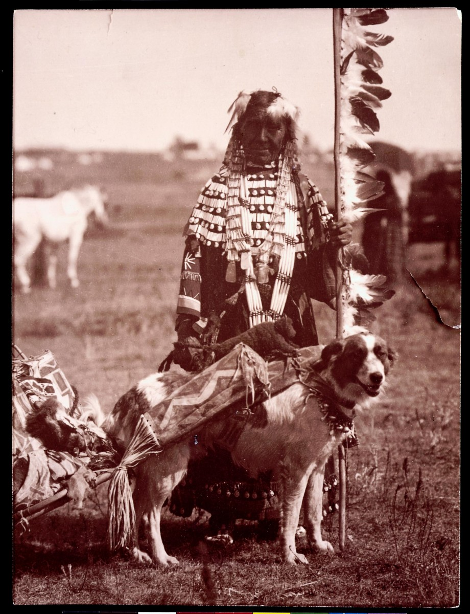 Dog attached to a travois loaded with personal belongings. MS 35 Native American Indian Photograph Collection, McCracken Research Library. P.35.191
