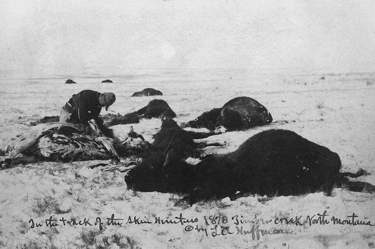 Buffalo hide hunting in northern Montana, 1878. MS 100 L.A. Huffman Collection. P.100.3104