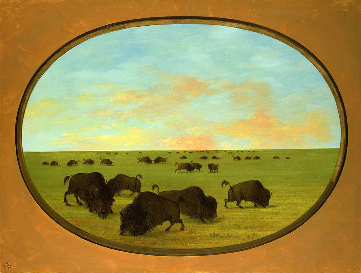 George Catlin (1796–1872). Buffaloes (bulls and cows) Grazing in the Prairie, ca. 1855–1870. Oil on paperboard. Gift of Paul Mellon. 27.86