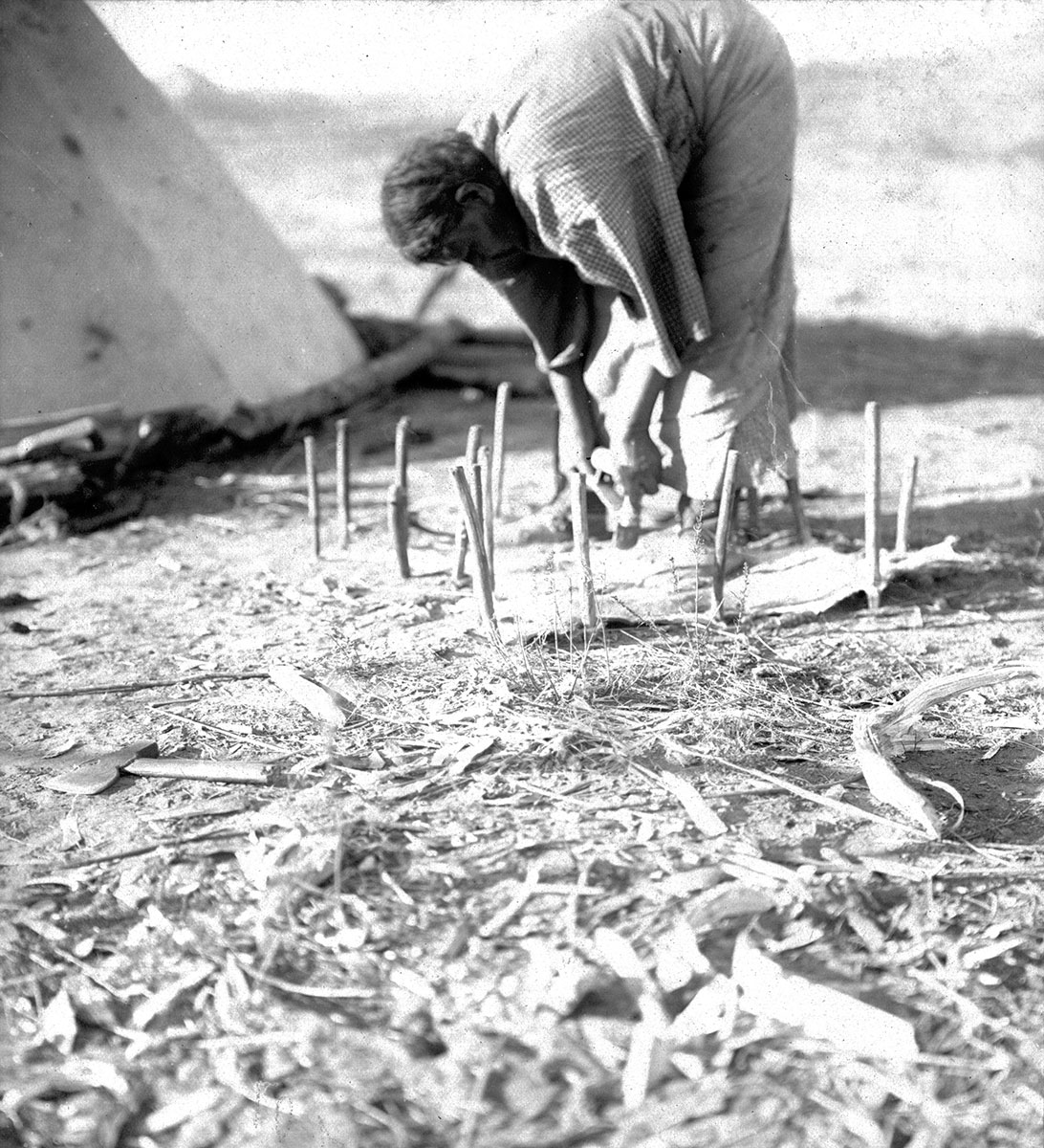 Northern Cheyenne woman scraping staked-out hide next to tipi, ca. 1902–1911. MS 37 George Bird Grinnell Indian Photographs Collection. P.37.1.7
