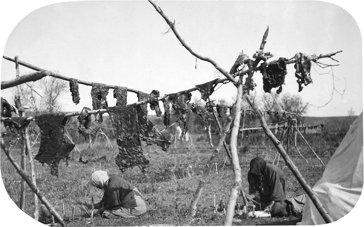 Crow women hanging meat to dry, and fleshing hides, ca. 1903–1925. MS 95 William A. Petzoldt Lantern Slide Collection. LS.95.82