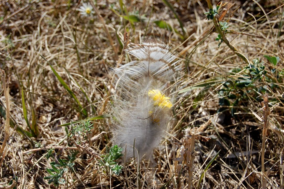 Feather in grass