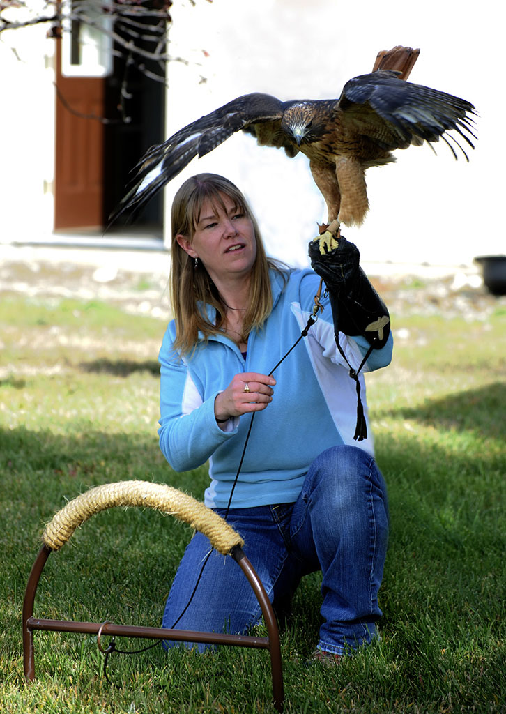 Melissa Hill and Isham, the red-tailed hawk.