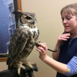 Avian Ambassadors and the Vet